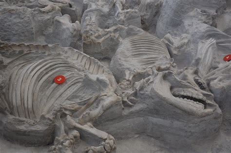 ashfall fossil beds hennacornoeli days
