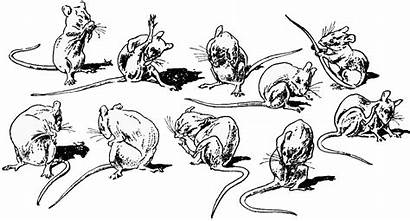 Mouse Clipart Washing Rat Drawing Line Drawings