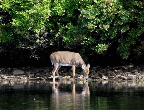 dnr michigan phone number dnr restricts numbers of antlerless deer hunters in