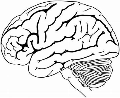 Brain Drawing Coloring Human Pages Svg Clipart