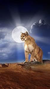 Mountain Lion HD Wallpaper #8042