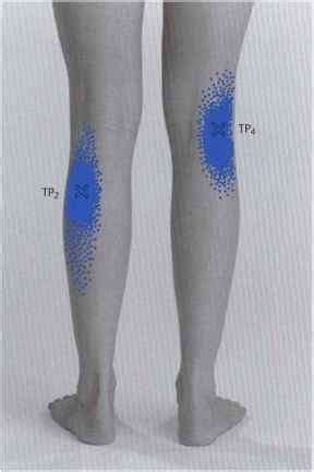 They are considered voluntary muscles. Muscles of Lower Leg Ankle and Foot Pain - Muscle Chains ...