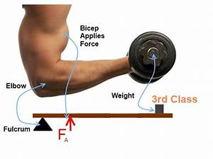 Exercise Science Review 1-5, Levers and Mechanical ...