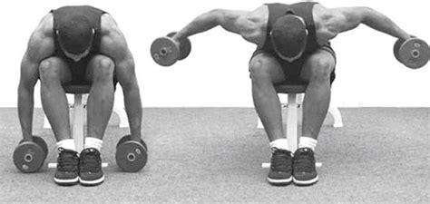 Épaules  Les Meilleurs Exercices Selon La Science
