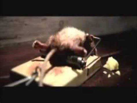 Maus Geht Nicht In Die Falle lustige werbung mit einer maus