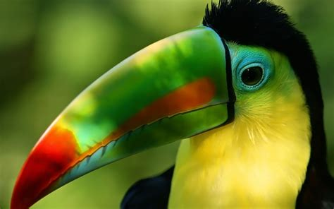 parrot wallpapers  wallpapers
