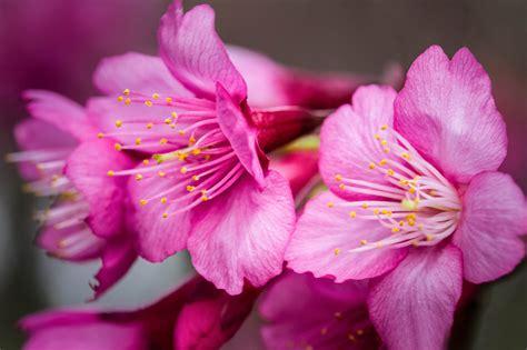 Best Wallpaper Hd 1080p Free Download 1366×768 Flower