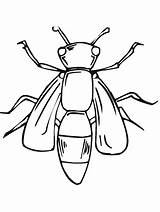 Coloring Pages Primarygames Insect Insects Bug sketch template