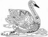 Coloring Pages Swan Colouring Adult Bird Printable Drawn Birds Pattern Adults Line Animal Mandalas Mandala Draw Sheets Ak0 Cool Books sketch template