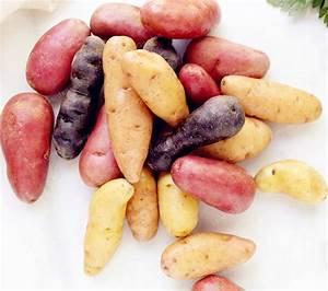 100 Russian Banana Fingerling Potato Seed Organic Seeds ...