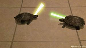 Jedi Funny Animal GIF - Find & Share on GIPHY