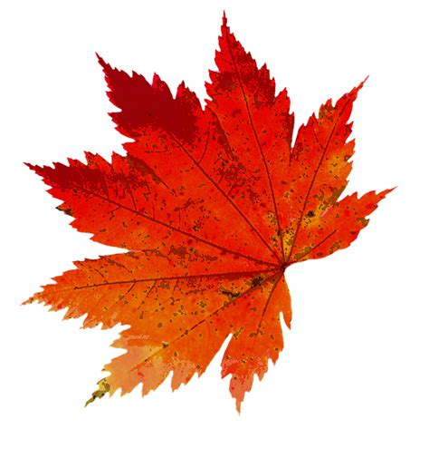 d駻ouleur cuisine free illustration autumn leaves color nature free image on pixabay 1608537