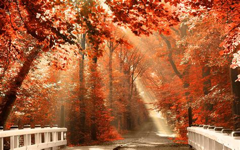 Fall Backgrounds For Desktop Computers by Fall Nature Desktop Wallpapers Top Free Fall Nature
