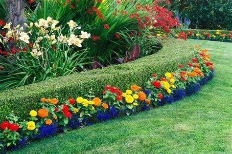Vari tipi di siepi fiorite. 10 Piante da siepe sempreverdi per una copertura tutto l'anno   Progettazione di cortili ...