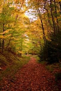 Forest Falls Hiking Trail