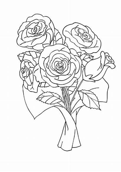 Roses Coloring Rose Dessin Coloriage Coloriages Nature