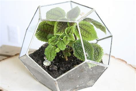 plant terrarium more air plant display ideas that seamlessly blend function and style