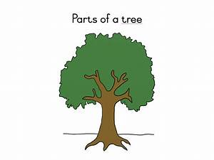 Parts Of A Tree Definition Booklet  U2013 Teacha