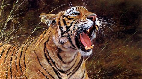 tiger wallpaper full hd  images