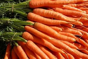 Carrots: Planting and Growing Carrots | The Old Farmer's ...  Carrot
