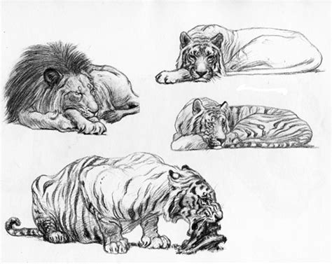 recommended drawing books  animal artists susan fox