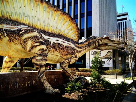 Spinosaurus At The National Geographic Museum