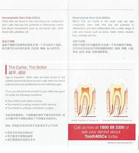 Harvest  U0026 Grow Stem Cells From Your Tooth