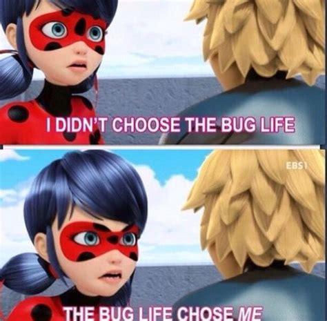 Miraculous Ladybug Memes - 187 best miraculous ladybug images on pinterest ladybugs black cats and lady bugs