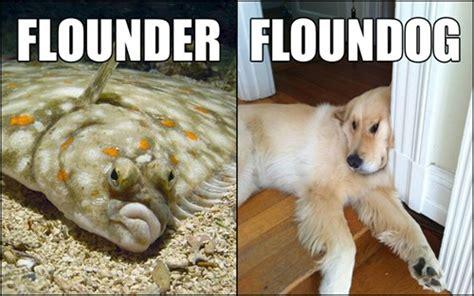 aint nothin   floundog    hotdog dog