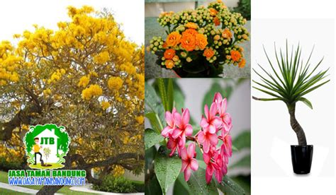 jenis jenis tanaman hias taman minimalis jasa