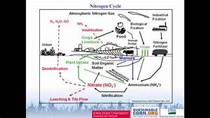 Speed Science  The Soil Nitrogen Cycle