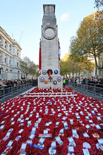 poppies  wreathed  remembrance day   cenotaph