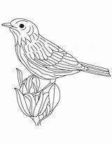 Goldfinch Coloring Eastern Template Flower sketch template