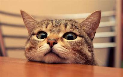 Cats Funny Wallpapers