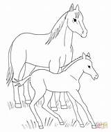Coloring Horse Pages Foal Horses Printable Spirit Animals Running Foals Drawing Animal Miniature Template Supercoloring Drawings Pferde Getdrawings Draw Getcolorings sketch template
