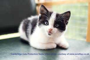 cat c welcome to cats protection