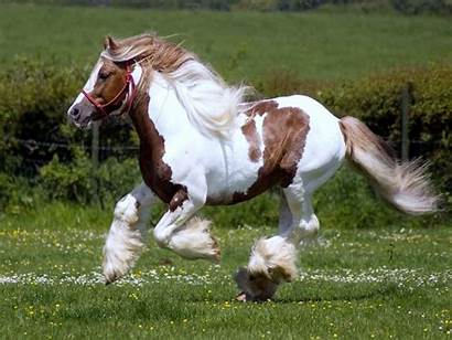 Horse Shire Wallpapers Clydesdale Horses Hipwallpaper Dtcl
