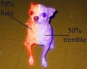 Small Dog Diagram - Napoleon Complex