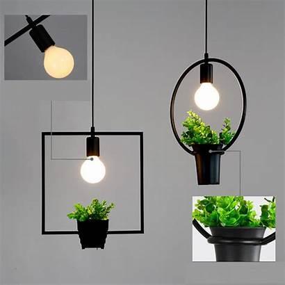 Lights Hanging Outdoor Plants Modern Nature Flowers