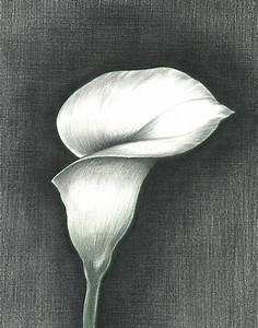 Calla Lily Photograph by Troy Levesque
