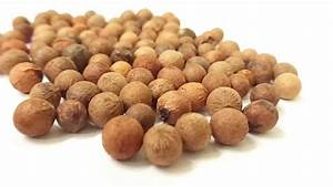 Tree Seed - INDIAN SANDALWOOD - Santalum album -CHANDAN ...