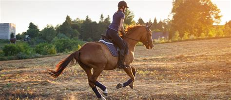 riding horse dubai lessons places mybayut adults