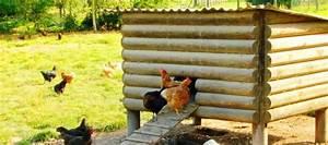 Comment Choisir Un Four : bien choisir un moyen poulailler 4 5 poules jardingue ~ Melissatoandfro.com Idées de Décoration