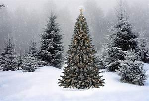 Wallpaper christmas, new year, christmas tree, snow ...