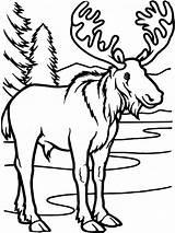Elk Coloring Pages Deer Head Stencil Template Printable Adult Animal Drawing Sheets sketch template