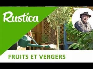 Planter Un Olivier En Pot : tout savoir sur l 39 olivier doovi ~ Dailycaller-alerts.com Idées de Décoration