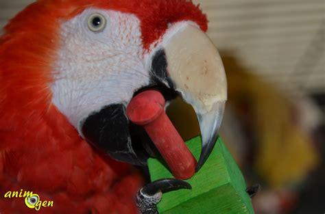 jouet de patte pour perroquet wood lolly pops de happy