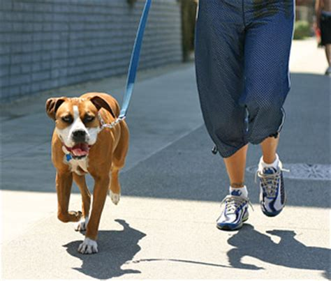 Exercise With Your Dog So You Both Get Fit