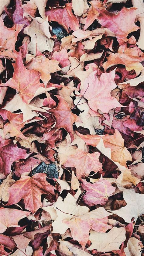Autumn Fall Gold Wallpaper Iphone happy fall iphone x wallpaper collection by