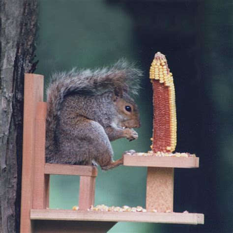 squirrel feeder lawn chair duncraft duncraft 570 squirrel chair feeder